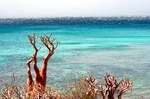 Summer on Socotra. A trip to the north-east of the island