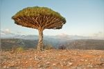 Photos and videos of Socotra