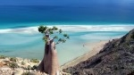 One week camping tour around Socotra 2020