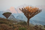 Exclusive Socotra Trekking Tour