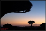 Socotra Picture of the Day: Sunset on the plateau Dixam