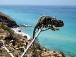 Socotra's Wild Beaches
