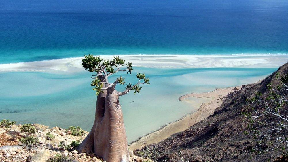 Socotra, Iêmen. Fonte: www.socotra.info