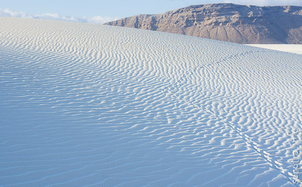 Socotra Picture of the Day: The white sands of Socotra