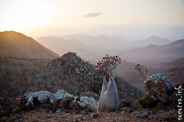 Socotra Picture of the Day: Evening landscape on the plateau Mumi