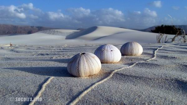 Socotra Picture of the Day: once in Socotra