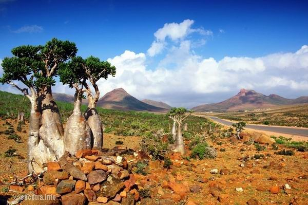 Socotra Picture of the Day: landscape on Mumi plateau