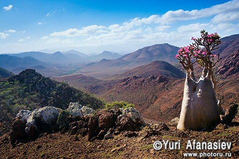 Socotra Picture of the Day: Afternoon on the plateau Mumi