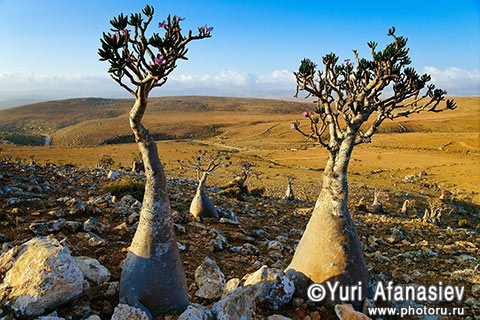 Socotra Picture of the Day: on Mumi plateau