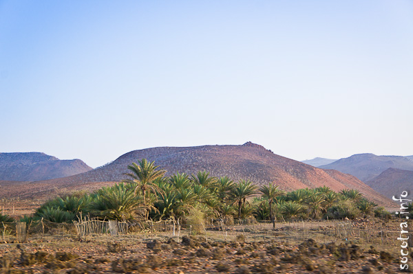 Socotra Picture of the Day: somewhere in the middle of the island