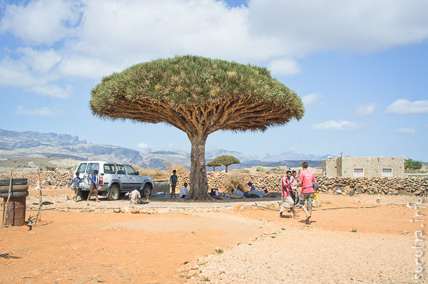 Socotra Picture of the Day: The village on the plateau Dixam