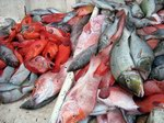 Fish Markets & Fishers