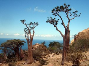 """The Lost World"", Socotra island"