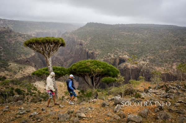 Sailors on Socotra