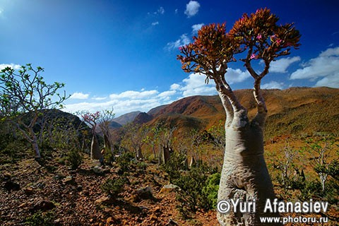 Socotra Picture of the Day:  landscape on the plateau Mumi
