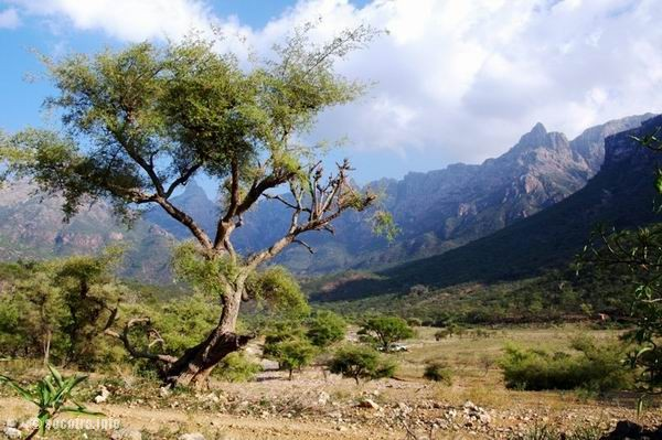 Socotra Picture of the Day: valley Ayaft