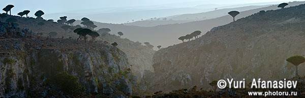 Socotra Picture of the Day: View of the plateau Dixam
