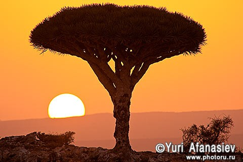 Socotra Picture of the Day: Sunset on the plateau of Dixam
