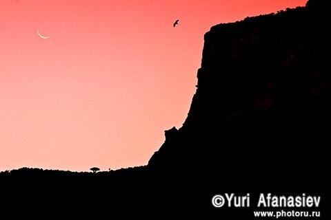 Socotra Picture of the Day: after sunset