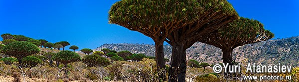 Socotra Picture of the Day: Dixam