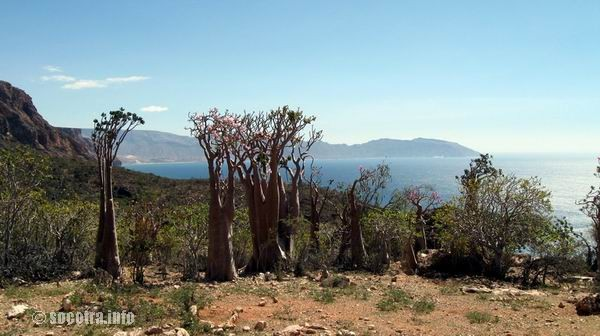Socotra Picture of the Day: The Lost World