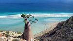 Feedback: My unforgettable Socotra experience